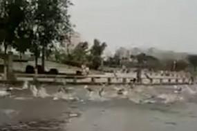 公园鱼群诡异景象惊呆众人