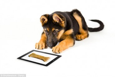 小狗专用平板电脑 能发短信打电话