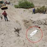 10岁男童旅途意外发现珍贵化石