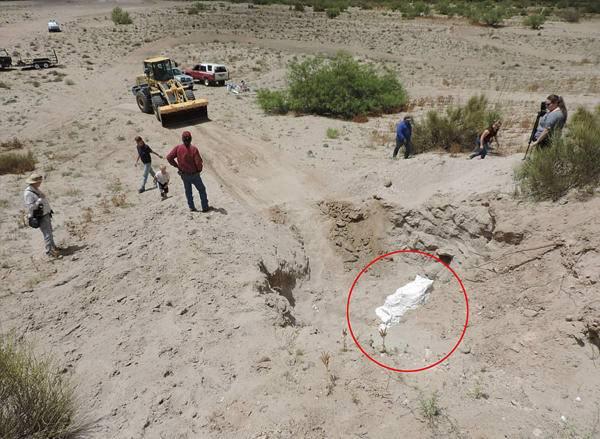 彼得在接受采访时称,他们一直知道拉斯科鲁塞斯附近有剑乳齿象化石存在于地表之下,但这些化石非常脆弱,一旦出土就很难逃过自然的侵蚀,不久就会被腐蚀分解,所以这些化石能保存得如此完好是非常难得的。-趣闻巴士