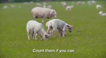 地球最催眠电影 8小时画面只有慢动作的羊:数着数着就睡着了