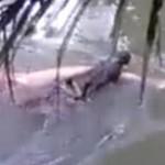 男子被鳄鱼拖走 巫师召唤后尸体又被完整送回