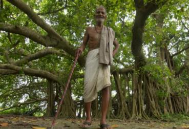 500岁榕树长成一大片树林