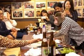 日本酒馆雇猴子服务员 工资是香蕉