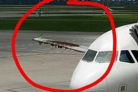 飞机推迟起飞90分钟 闯祸的竟是小蜜蜂