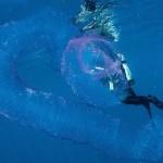 潜水员遭遇神秘巨型海洋独角兽