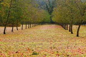 壮观!果园遭风暴袭击苹果掉落铺成地毯