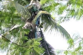 男子受刺激呆树上三年不下来 众人只得砍倒树