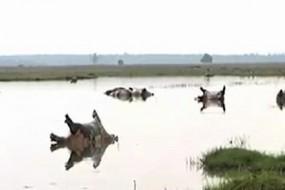 非洲河马大量死亡横尸遍野 景象骇人