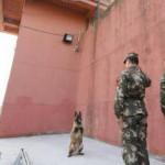 军犬巡逻遇老兵退役 起身向老兵敬礼送别