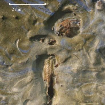 梵高《橄榄树》颜料中发现百年前蚱蜢