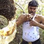 养蜂人背心里塞上千只蜜蜂 被蛰后一杯热茶就能解毒