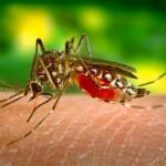 蚊子最讨厌拍打声 这样做能让蚊子远离你