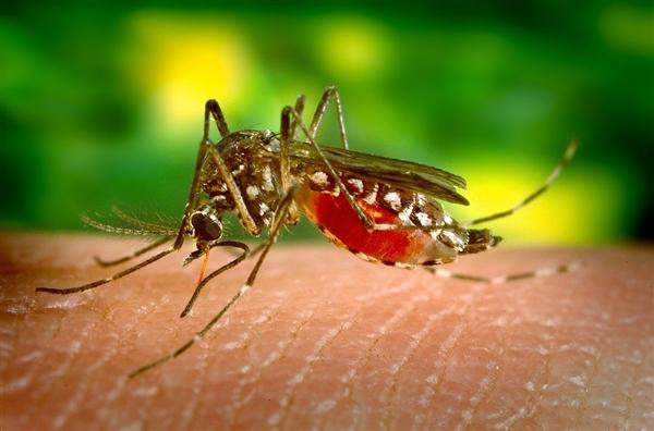 研究发现蚊子会主动避开特定气味的人群-趣闻巴士