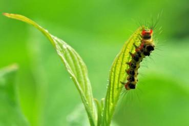 植物也有智力 能相互沟通并和毛毛虫交流