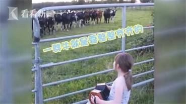 女孩对牛弹琴牛们排队倾听沉醉其中