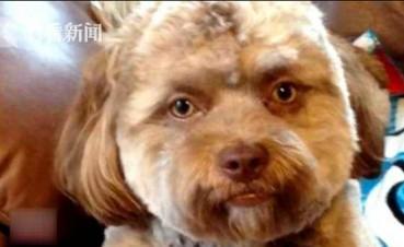 小狗撞脸众多好莱坞帅哥