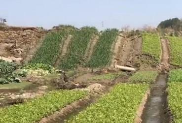 广东揭阳一菜地突然隆起3米 菜农吓得撒腿狂奔