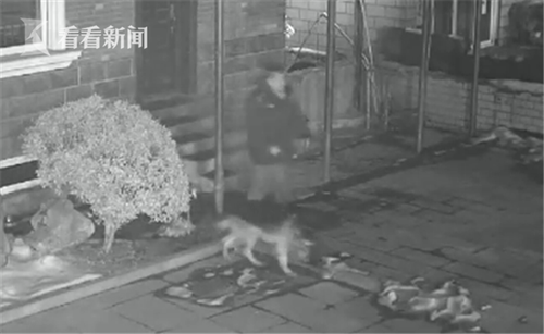 男子身上有狗气息可以跟狗对话 专门偷狗卖钱-趣闻巴士