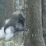 印度大象被拍到喷云吐雾 原因未明