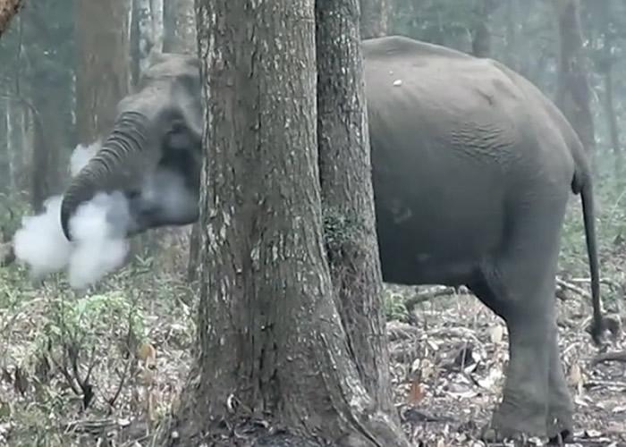 """印度国家公园拍到一只大象竟在""""吞云吐雾""""-趣闻巴士"""