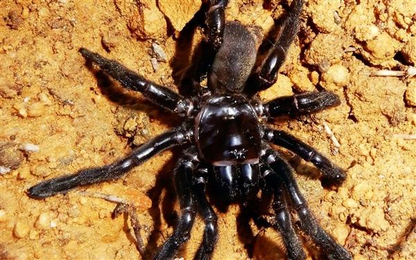 """世界上最长寿的蜘蛛""""16号""""死亡:存世43年-趣闻巴士"""