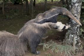 p过的图竟获野生动物摄影大奖