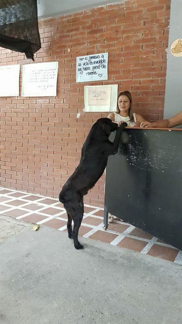 看到学生拿钱买饼干后 这只狗做出了惊人举动-趣闻巴士