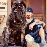 美国培育出世界最大狗 站起来身高1.83米