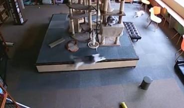 视频拍地震前猫咪突然乱窜