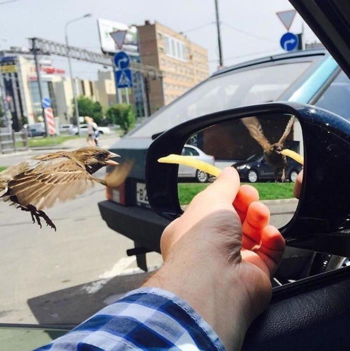 男子透过车窗喂麻雀吃薯条的照片走红:镜里镜外鸟的翅膀方向竟然不同-趣闻巴士
