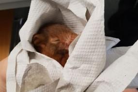 松鼠把男子当妈妈狂追 累坏倒地睡着