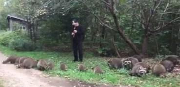 男子用神秘笛声召唤森林中浣熊