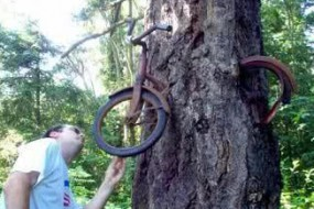 神奇大树把周围物体都吃了