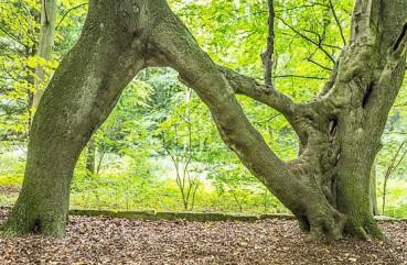 英国N形求爱树故事感人