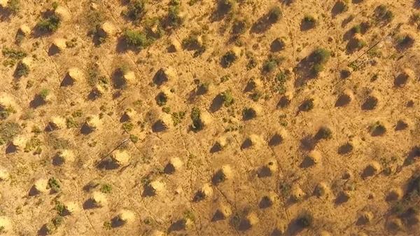 巴西森林发现2亿座白蚁丘:面积有一个不列颠岛那么大-趣闻巴士
