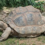科学家发现巨龟长寿基因