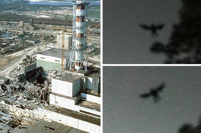 """""""切尔诺贝利黑鸟""""!切尔诺贝利核电站发生事故前曾出现""""神秘生物""""?-趣闻巴士"""