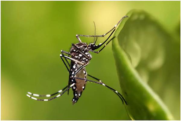 转基因蚊子试验惹争议:想让蚊子不孕不育 却产生了新变种?-趣闻巴士