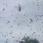 澳洲火灾中30万只巨大蝙蝠逃入城市 能咬断人脖子